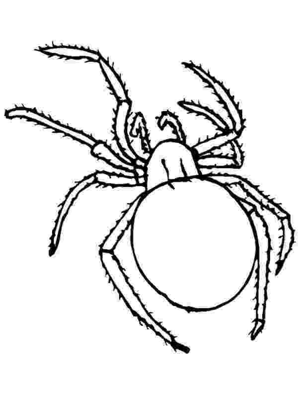 tarantula coloring page printable halloween decoration cutouts page tarantula coloring