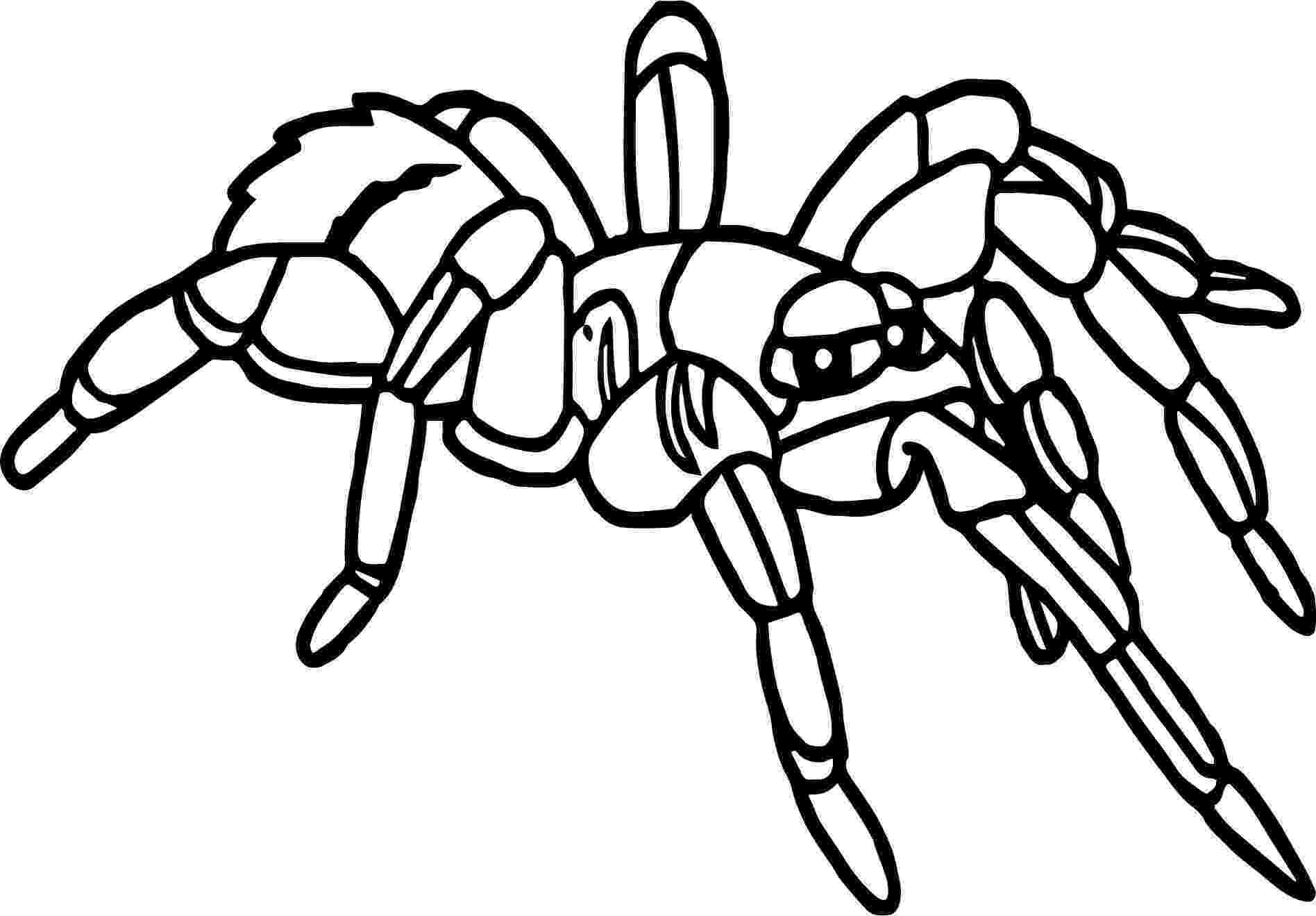 tarantula coloring page rainforest tarantula coloring page wecoloringpagecom tarantula page coloring