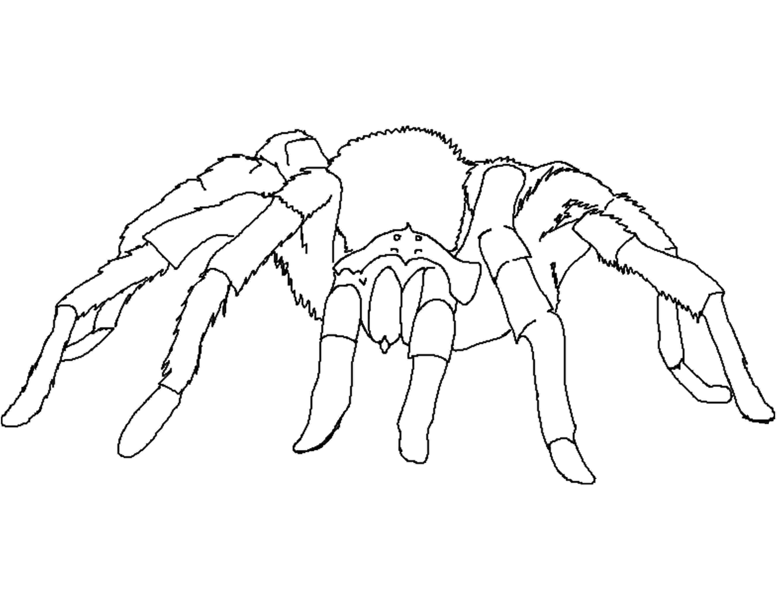 tarantula coloring page spider coloring pages to download and print for free tarantula coloring page