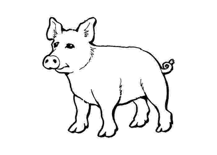 template of a pig 31 best coloring farm stuff images on pinterest animal of a template pig