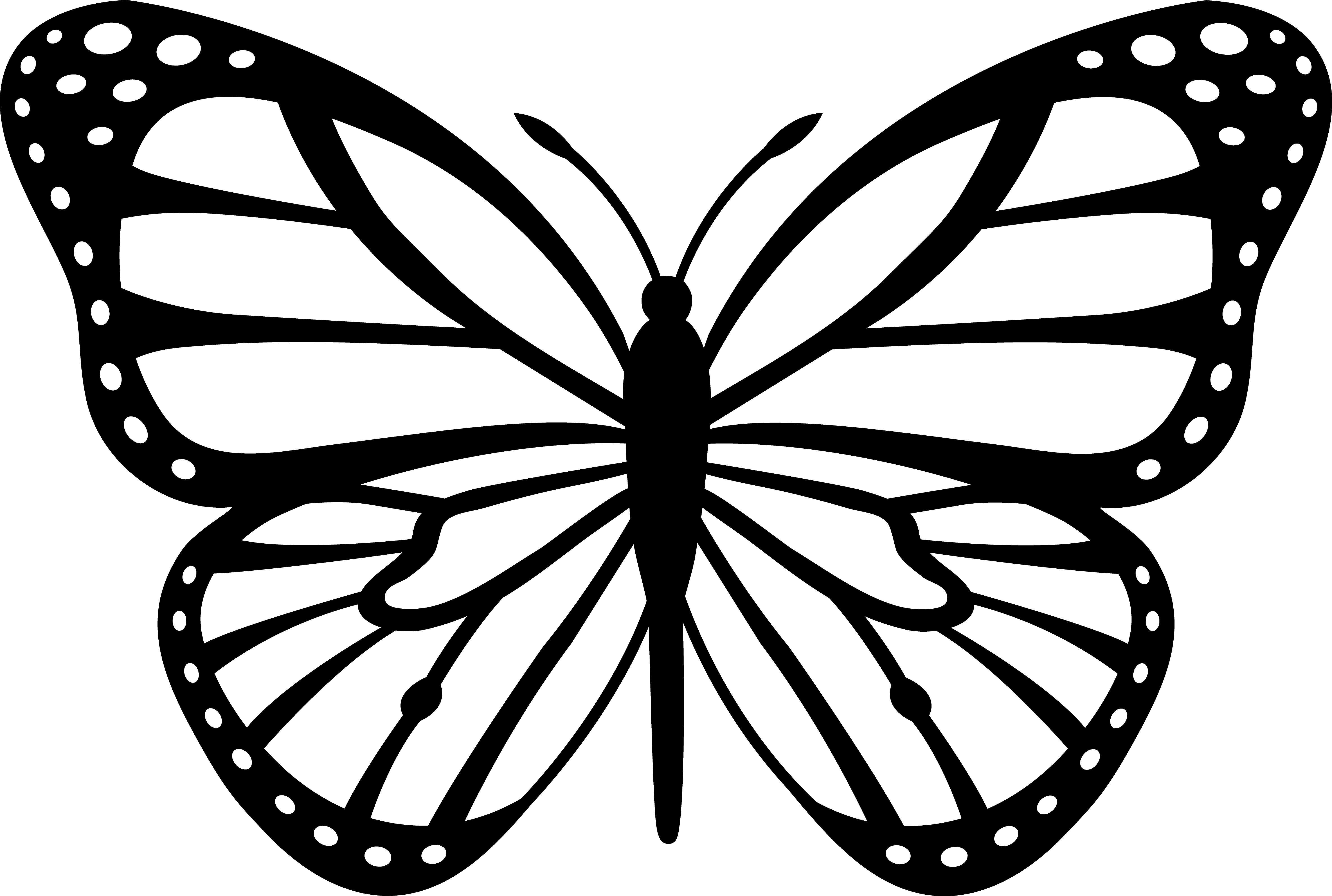 template of butterfly for colouring clipart butterfly outline clipart panda free clipart colouring of for template butterfly