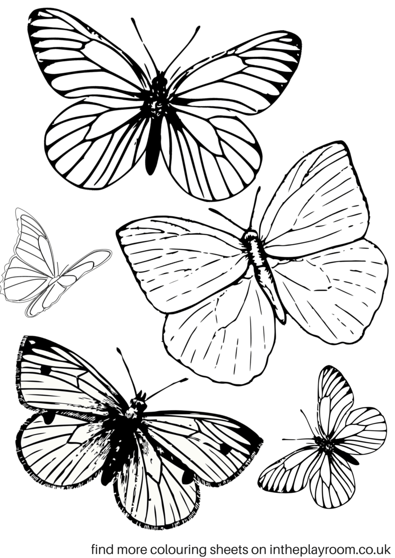 template of butterfly for colouring free printable butterfly colouring pages in the playroom template of butterfly for colouring
