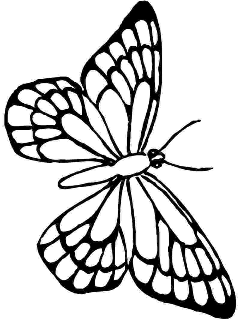 template of butterfly for colouring monarch butterfly outline free download best monarch butterfly colouring of for template