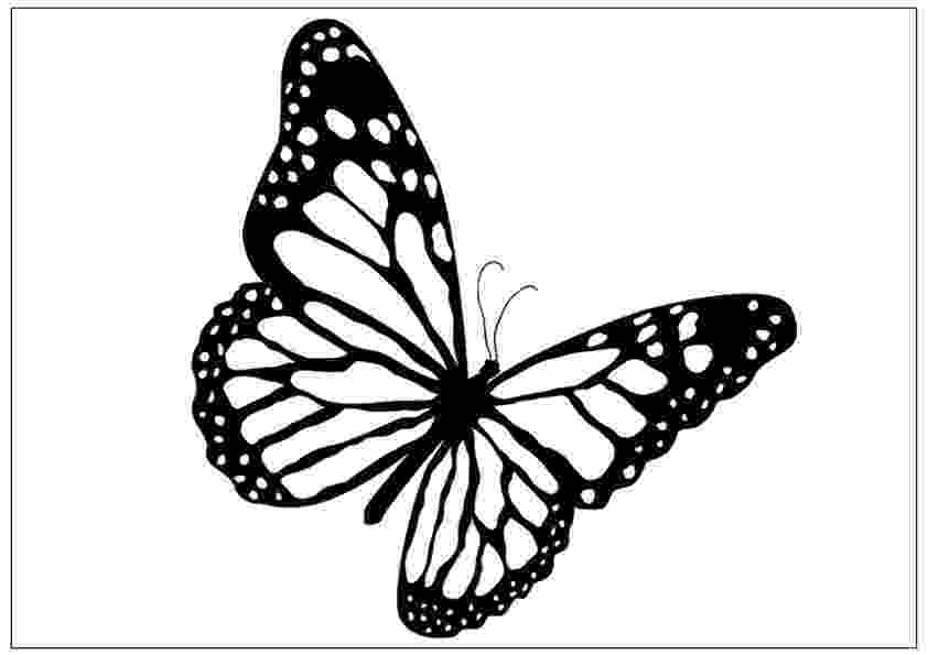 template of butterfly for colouring printable fun butterfly coloring pages for kids art hearty of for colouring butterfly template