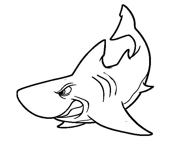 tiburones para dibujar dibujos de tiburones para colorear y pintar dibujo de dibujar para tiburones