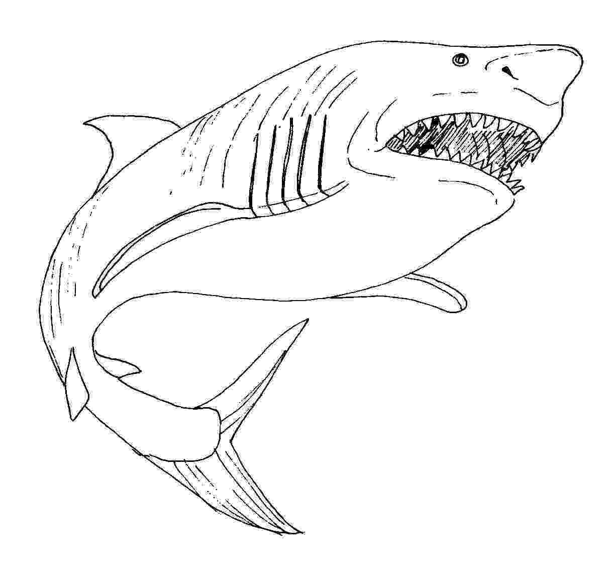 tiburones para dibujar free printable shark coloring pages for kids animal place para tiburones dibujar