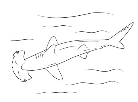 tiburones para dibujar hammerhead shark coloring page free printable coloring pages tiburones dibujar para