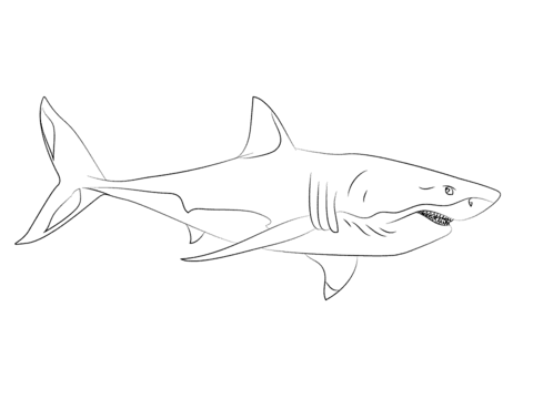 tiburones para dibujar how to draw a shark step by step fish animals free para dibujar tiburones