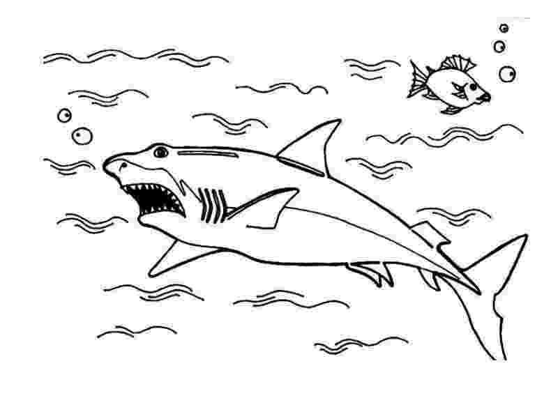 tiburones para dibujar pin by luke on the art of self promotion shark para tiburones dibujar