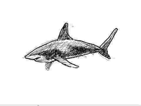 tiburones para dibujar shortfin mako shark coloring pages hellokidscom dibujar tiburones para