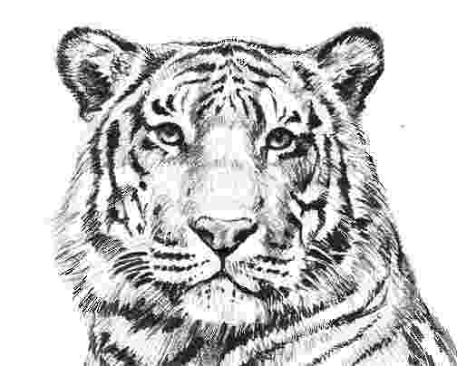 tiger pictures to print and color free printable tiger coloring pages for kids and print tiger color pictures to