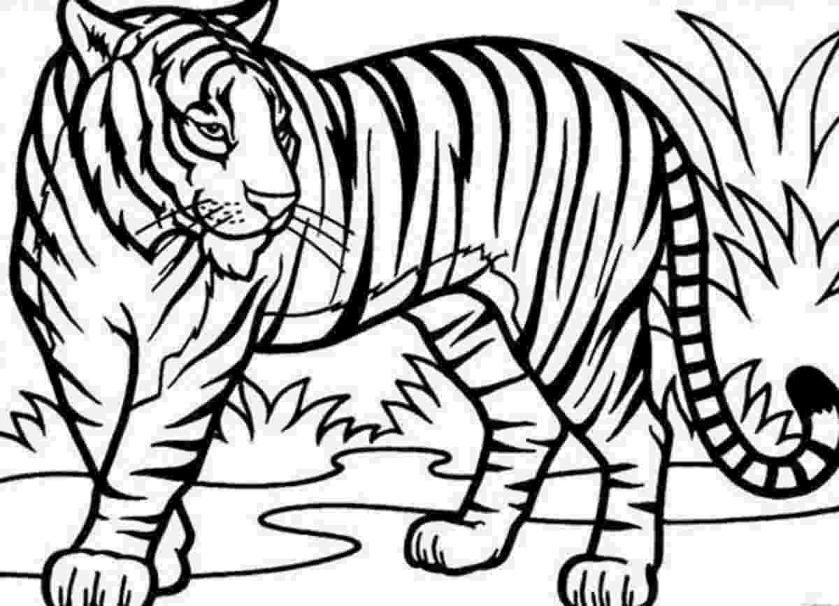 tiger pictures to print and color free tiger coloring pages tiger color print and pictures to
