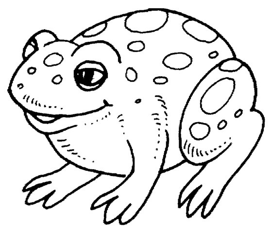 toad pictures to print free frog coloring pages toad pictures to print