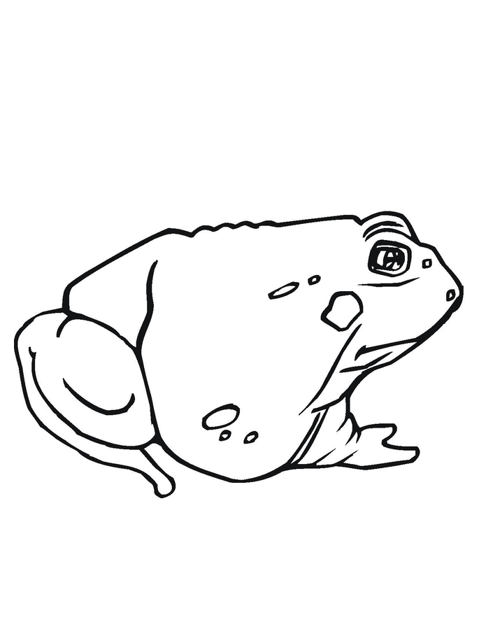 toad pictures to print print download frog coloring pages theme for kids pictures print to toad