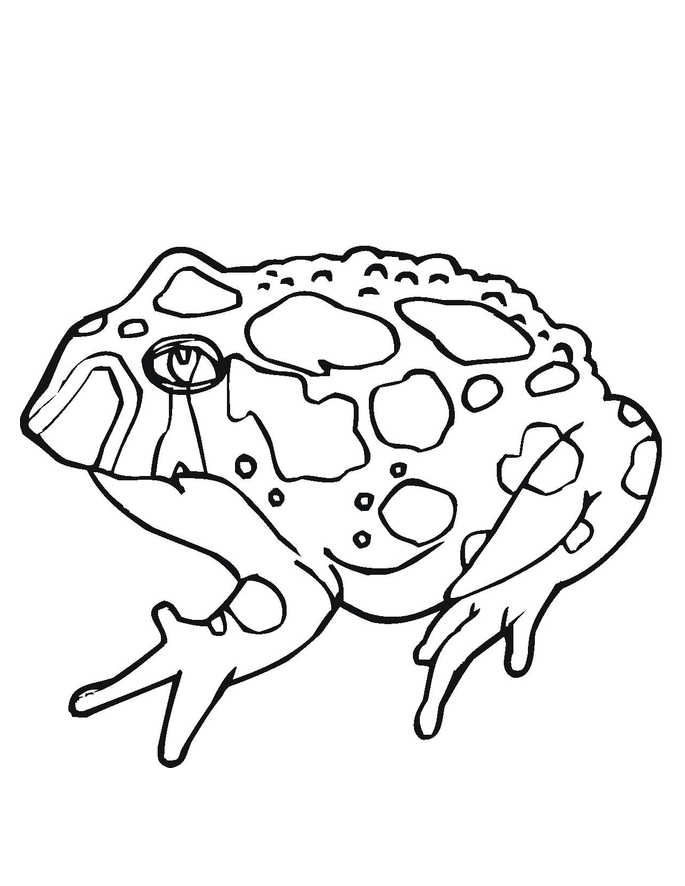 toad pictures to print printable toad coloring pages for kids cool2bkids print toad pictures to