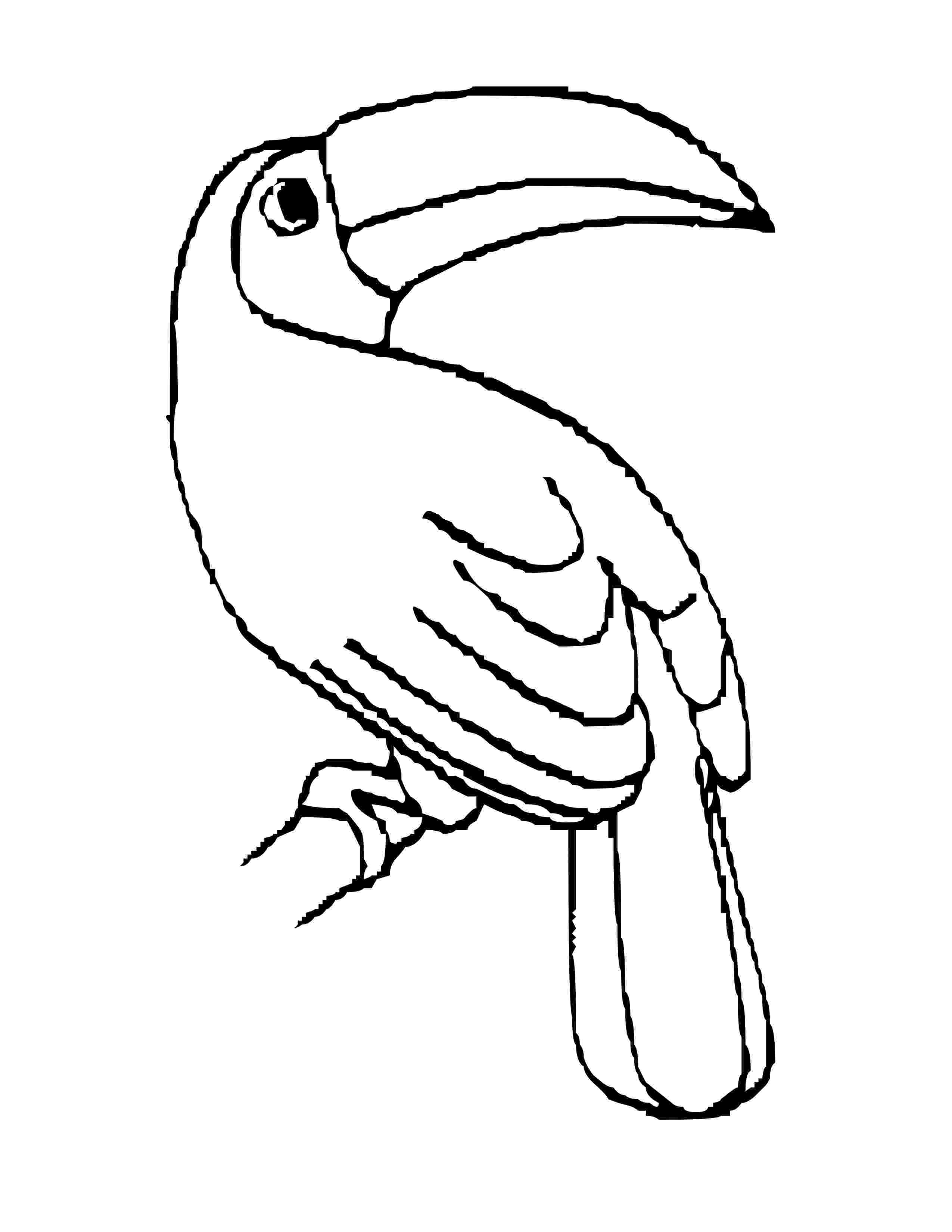 toucan colouring pages toucan coloring page bird coloring pages coloring pages pages toucan colouring