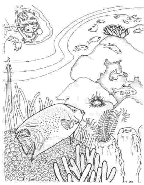 tropical fish coloring pages tropical fish coloring page coloring page summer tropical coloring pages fish