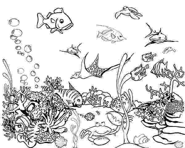 tropical fish coloring pages tropical fish drawing at getdrawingscom free for pages fish coloring tropical