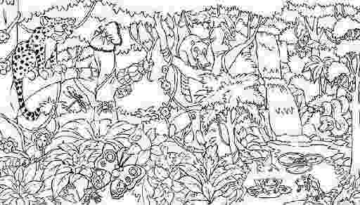tropical rainforest coloring page free rainforest coloring pages free coloring pages rainforest coloring tropical page