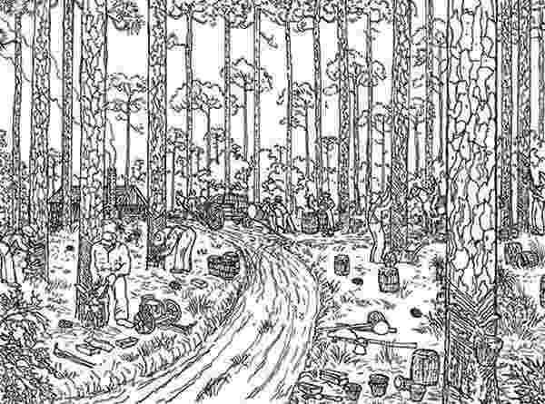 tropical rainforest coloring page free rainforest coloring pages free coloring pages tropical coloring rainforest page