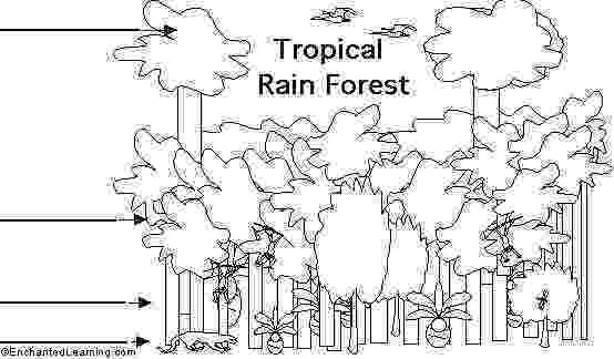 tropical rainforest coloring page rainforest animal coloring pages getcoloringpagescom coloring page tropical rainforest