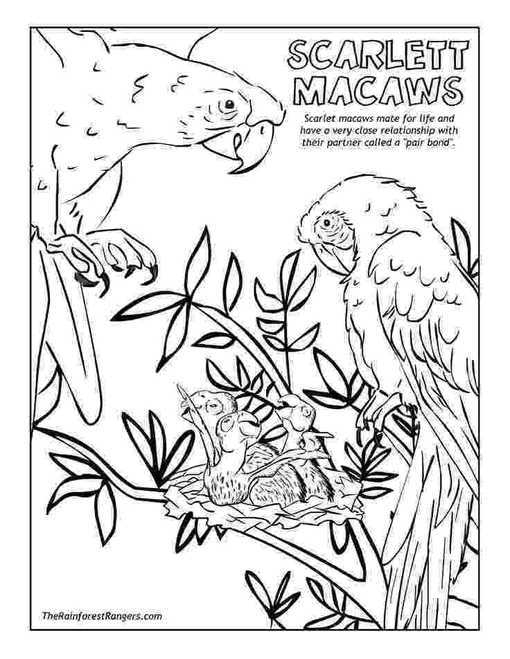tropical rainforest coloring page rainforest animal coloring pages getcoloringpagescom rainforest page coloring tropical