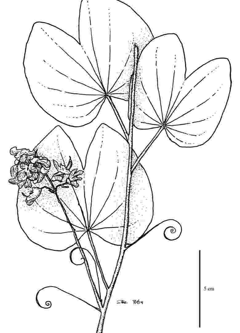 tropical rainforest coloring page rainforest coloring pages to download and print for free coloring rainforest tropical page