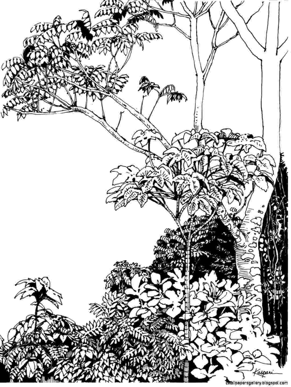 tropical rainforest coloring page rainforest snake and monkey coloring page download coloring page rainforest tropical