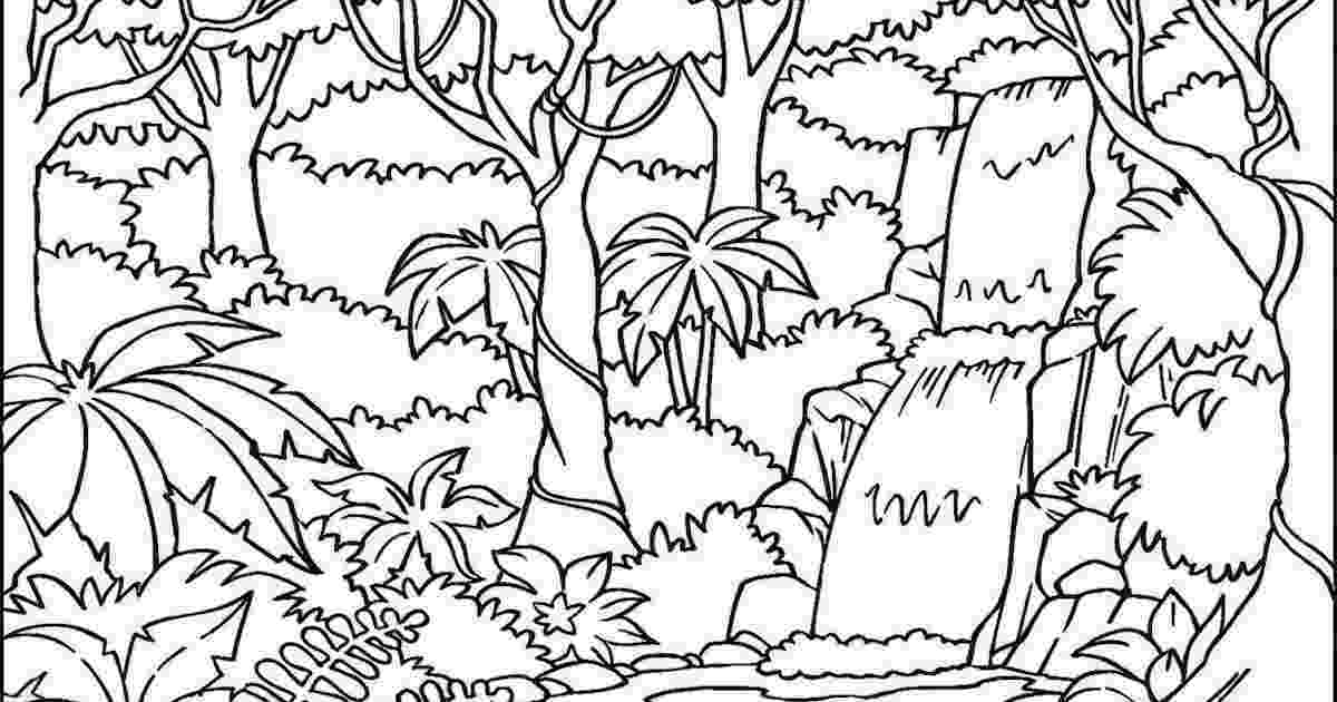 tropical rainforest coloring page the best free rainforest drawing images download from 772 tropical coloring page rainforest