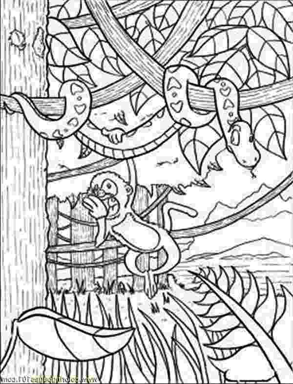 tropical rainforest coloring page tropical rainforest animals coloring pages at getcolorings tropical page rainforest coloring