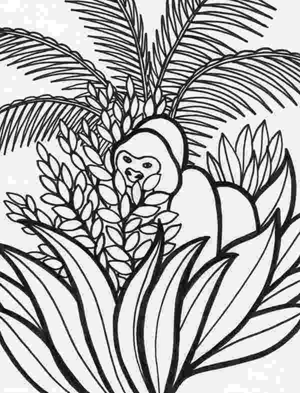 tropical rainforest coloring page tropical rainforest drawing at getdrawingscom free for coloring page tropical rainforest