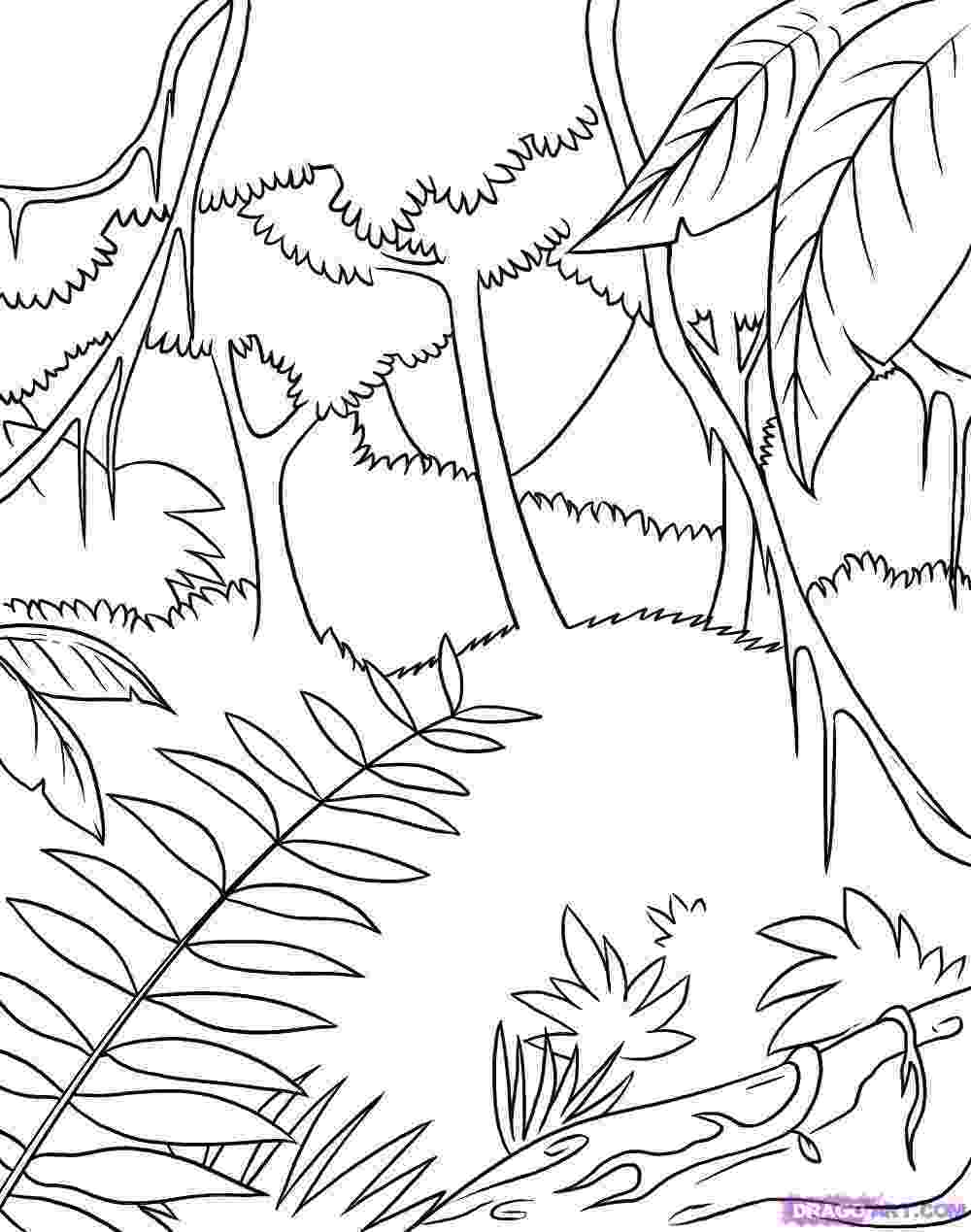 tropical rainforest coloring page tropical rainforest drawing at getdrawingscom free for rainforest tropical coloring page