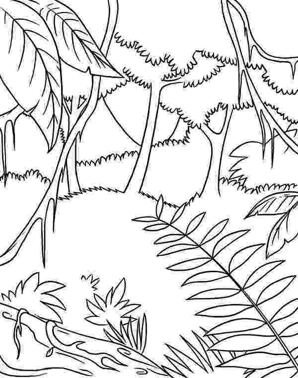 tropical rainforest coloring page tropical rainforest drawing at getdrawingscom free for tropical page rainforest coloring