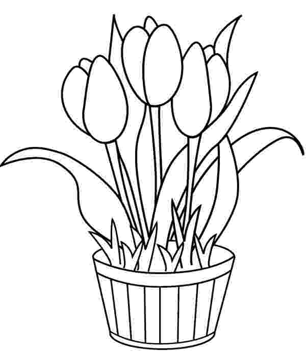 tulip colouring pages free printable tulip coloring pages for kids colouring tulip pages