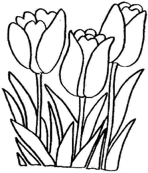 tulips to color free printable tulip coloring pages for kids color to tulips