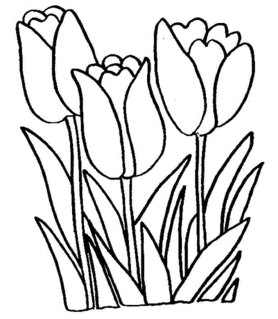 tulips to color free printable tulip coloring pages for kids to color tulips
