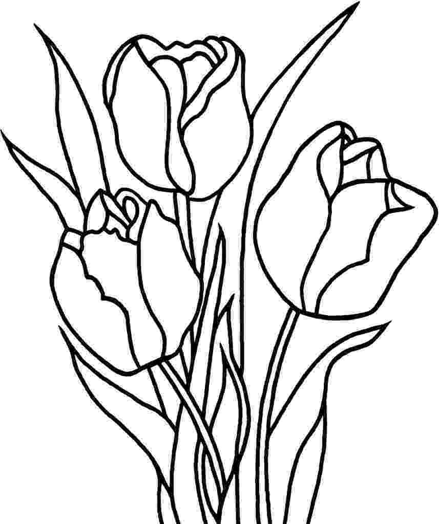 tulips to color free printable tulip coloring pages for kids to tulips color