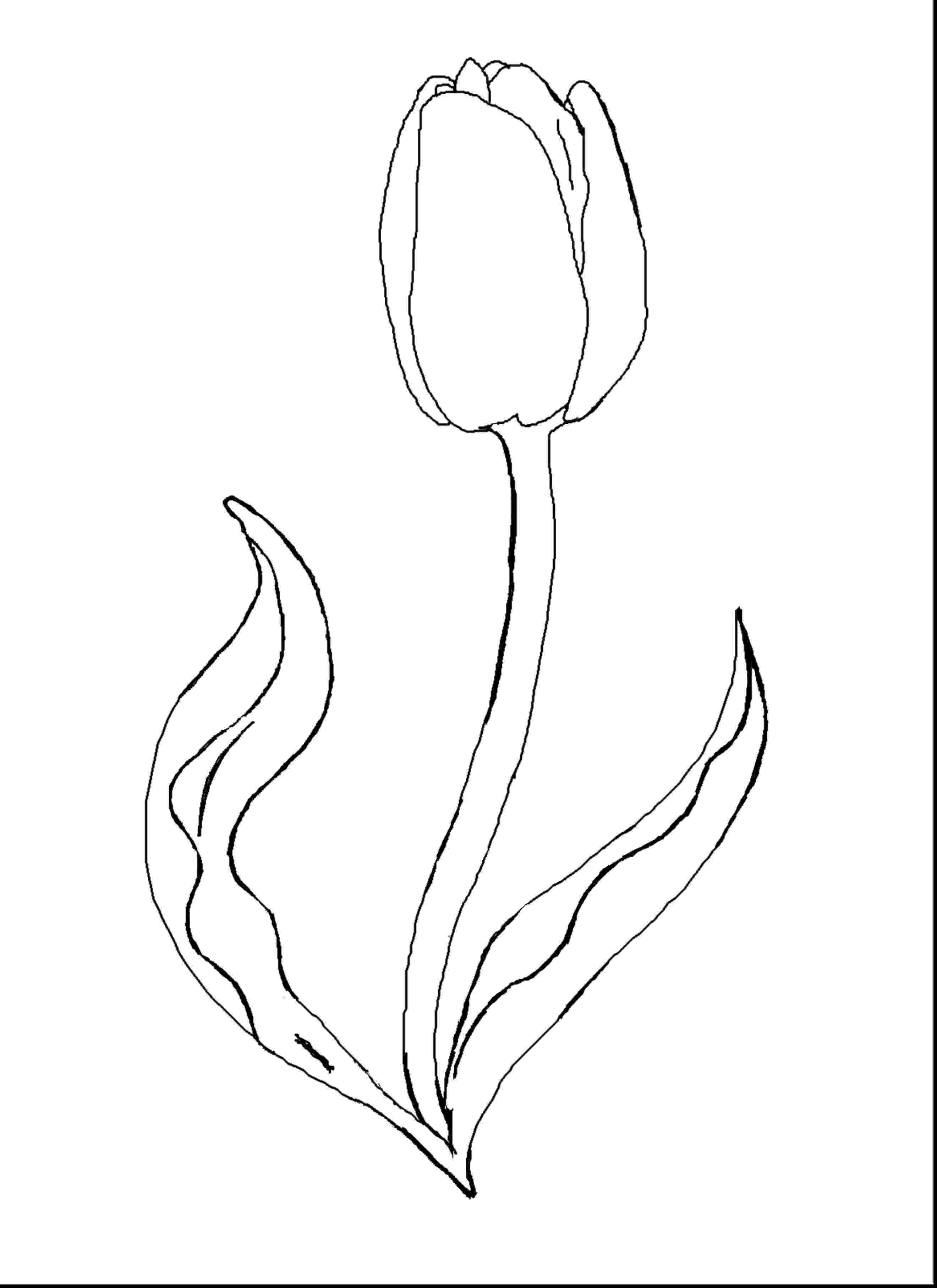 tulips to color large printable tulips clipart best tulips to color