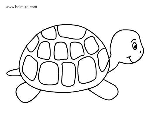 turtle coloring pictures to print 316 best images about animal coloring pages on pinterest to pictures coloring turtle print