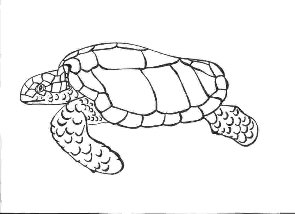 turtle coloring pictures to print cartoon turtle coloring pages cartoon coloring pages pictures coloring turtle to print