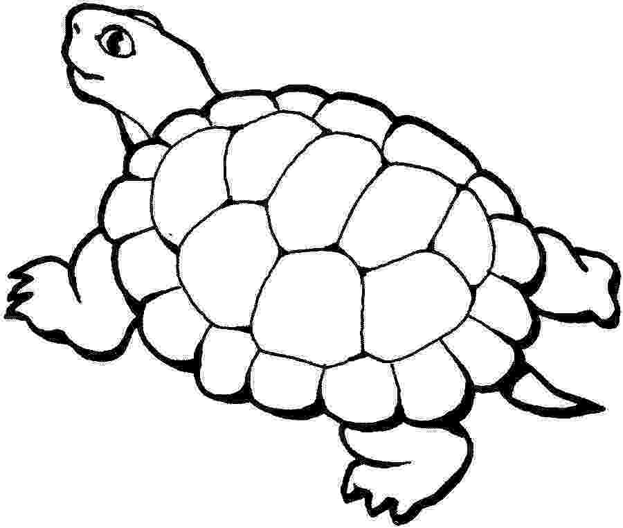 turtle coloring pictures to print free printable animal quot turtle quot coloring pages turtle coloring print to pictures
