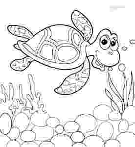 turtle coloring pictures to print sea turtle coloring pages to download and print for free turtle print pictures coloring to