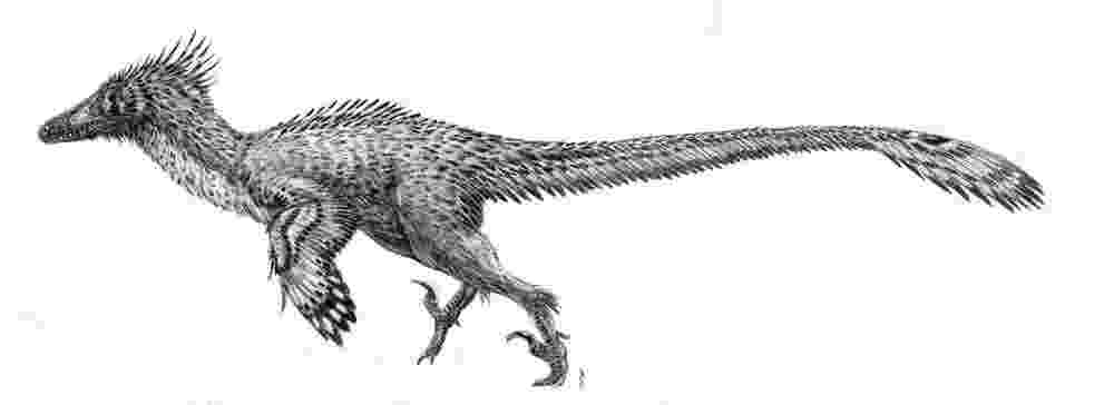 velociraptor pictures how to draw blue the velociraptor jurassic world drawing pictures velociraptor
