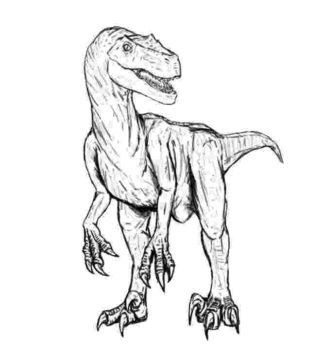 velociraptor pictures velociraptor coloring pages best coloring pages for kids pictures velociraptor 1 2