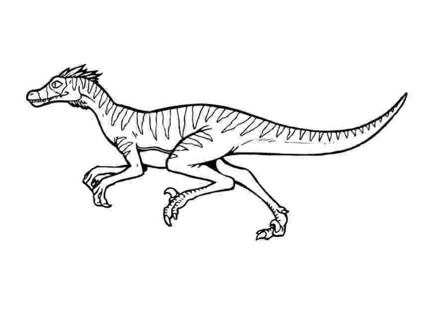 velociraptor pictures velociraptor coloring pages best coloring pages for kids velociraptor pictures