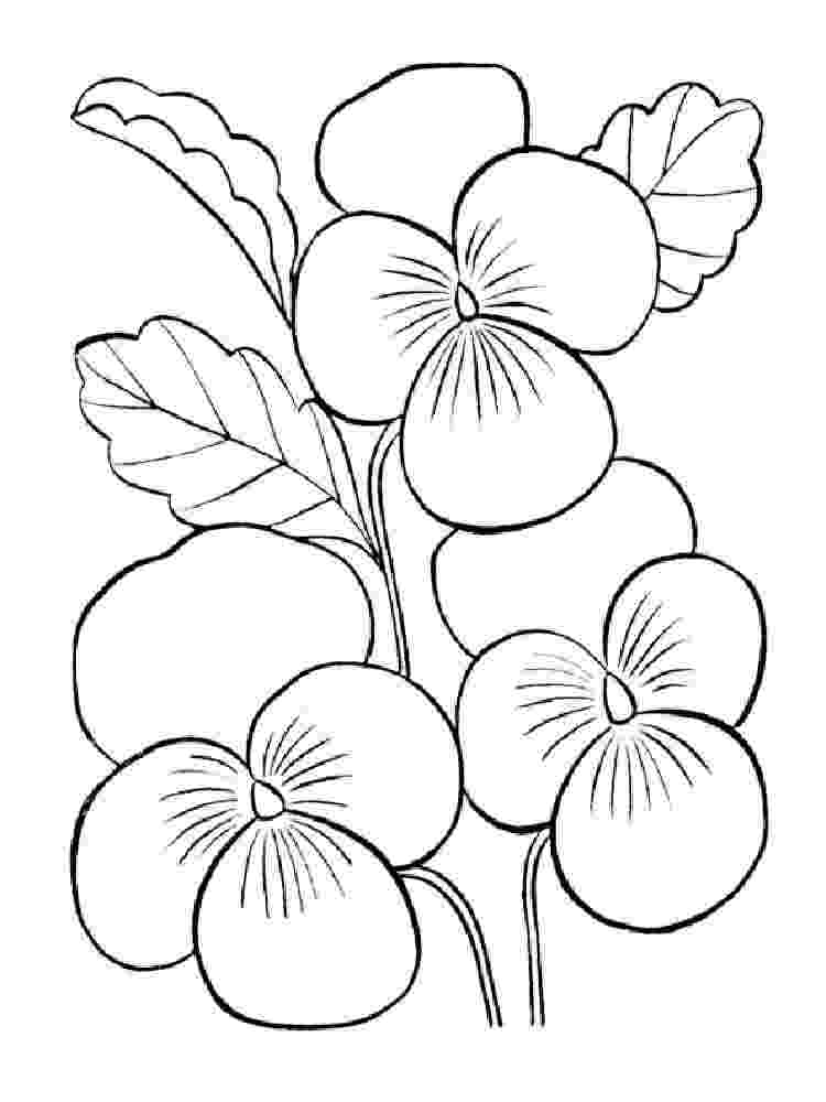 violet flower coloring page beautiful printable flowers coloring pages flower page coloring violet
