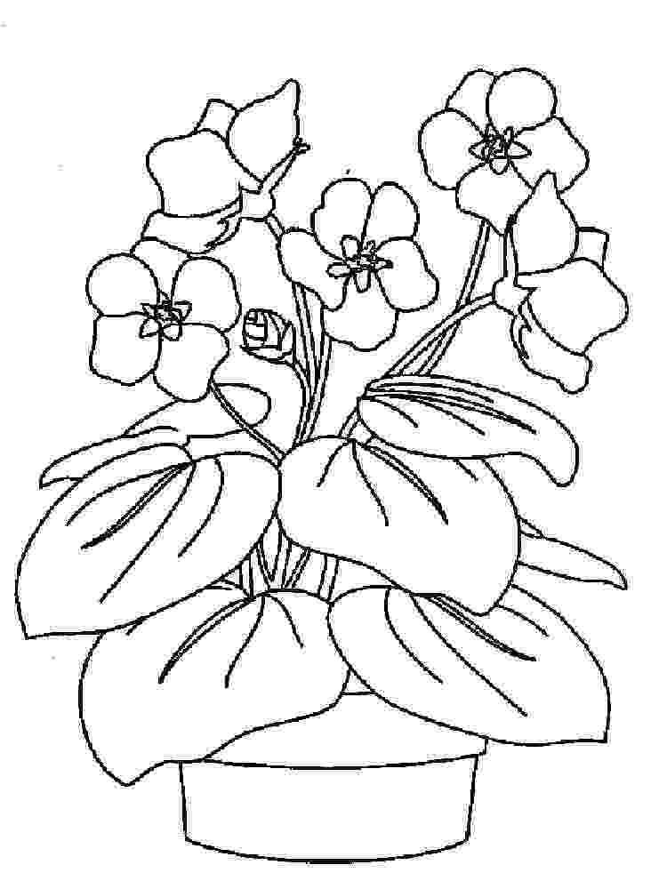 violet flower coloring page print africa coloring pages african violets coloring page flower coloring violet