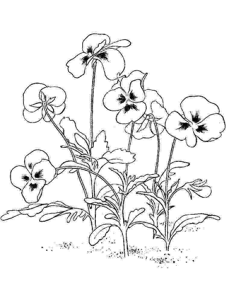 violet flower coloring page purple violet with labels coloring flower violet page