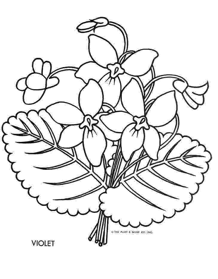 violet flower coloring page state flower printouts nebraska oregon flower violet coloring page flower