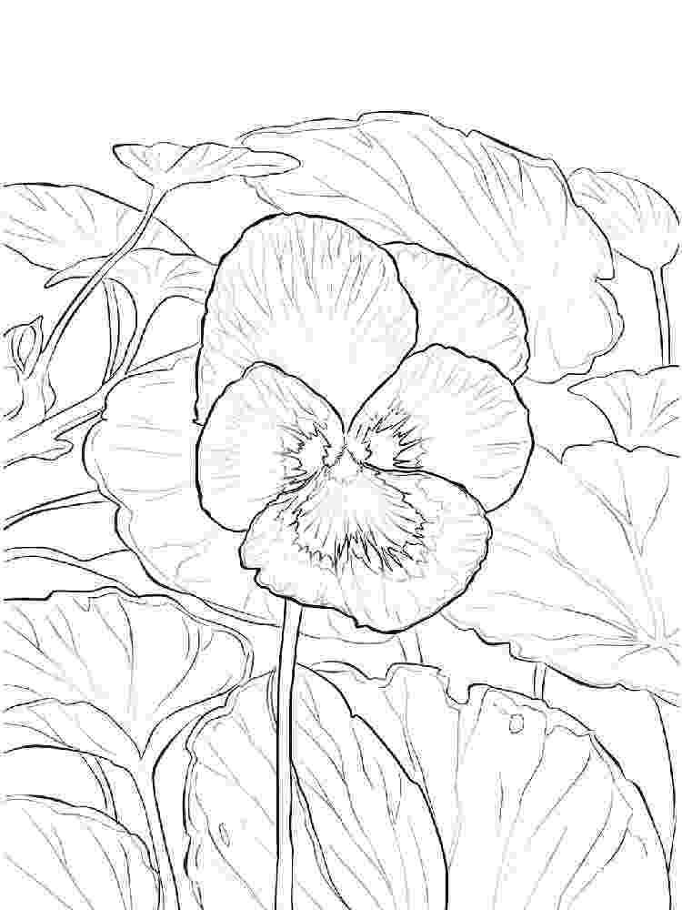 violet flower coloring page violet coloring pages download and print violet coloring page coloring flower violet